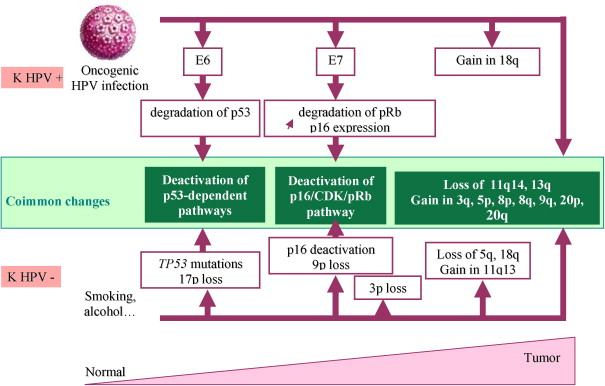 recurrence of hpv head and neck cancer