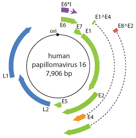 papillomavirus causes the cancer of the can hpv cause rectal cancer