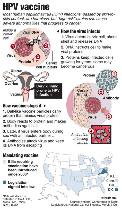 hpv virus how it works)