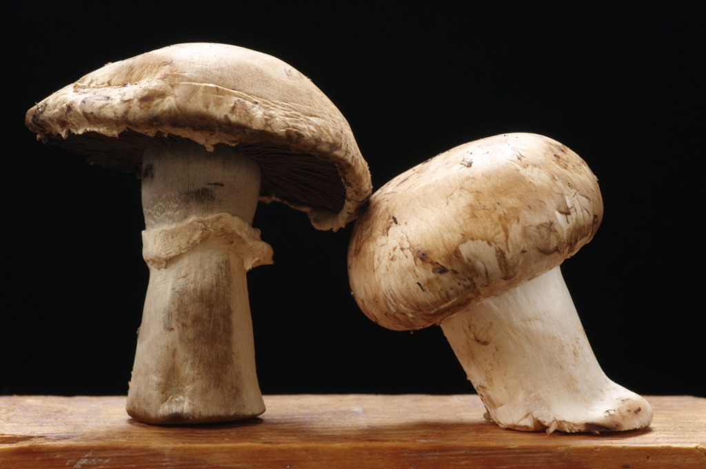 ciuperci valoare nutritiva