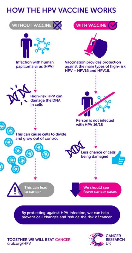 hpv virus high risk)