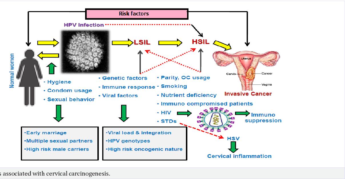 hpv cervical cancer risk factor)