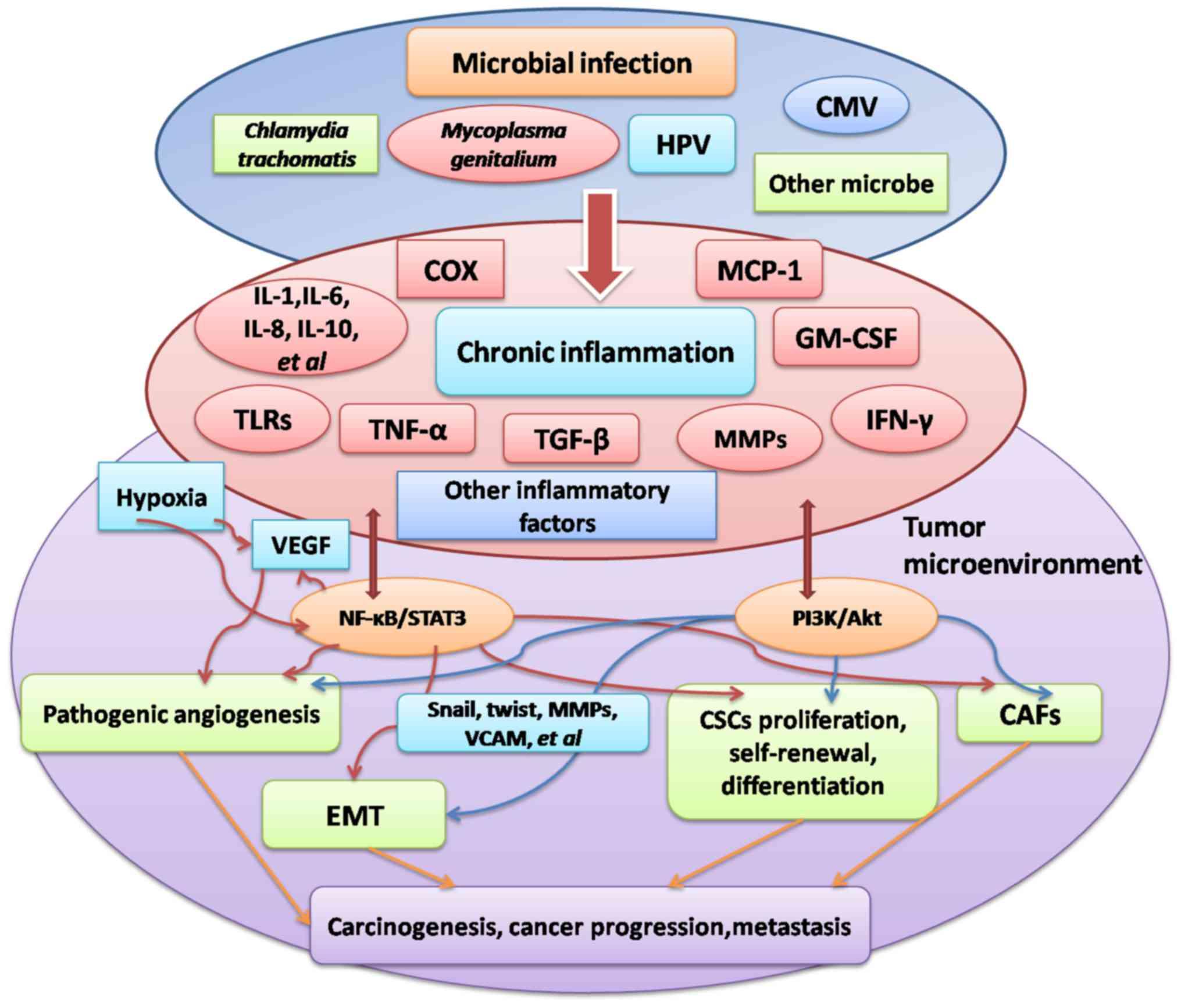 human papillomavirus in ovarian cancer
