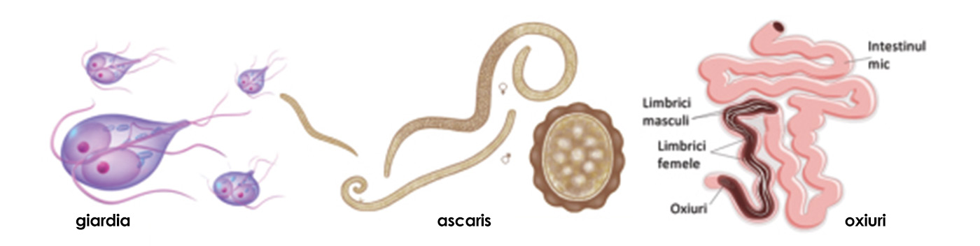 paraziti intestinali la vitei)
