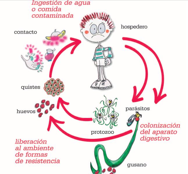 que enfermedades producen los oxiuros
