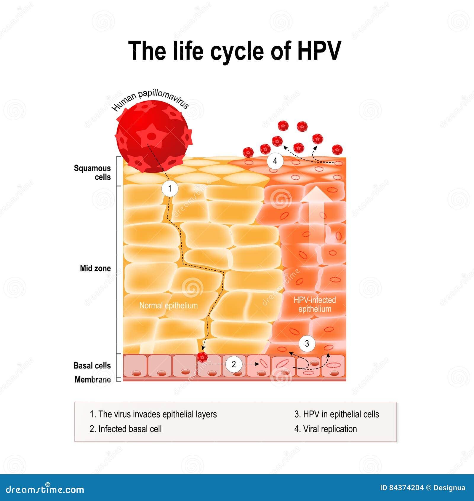 human papilloma virus airborne