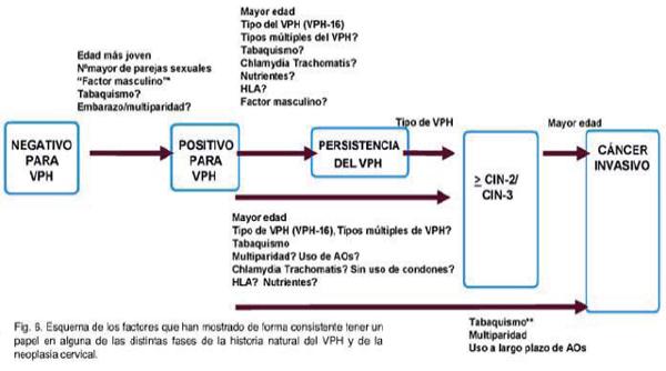 virus del papiloma humano historia natural