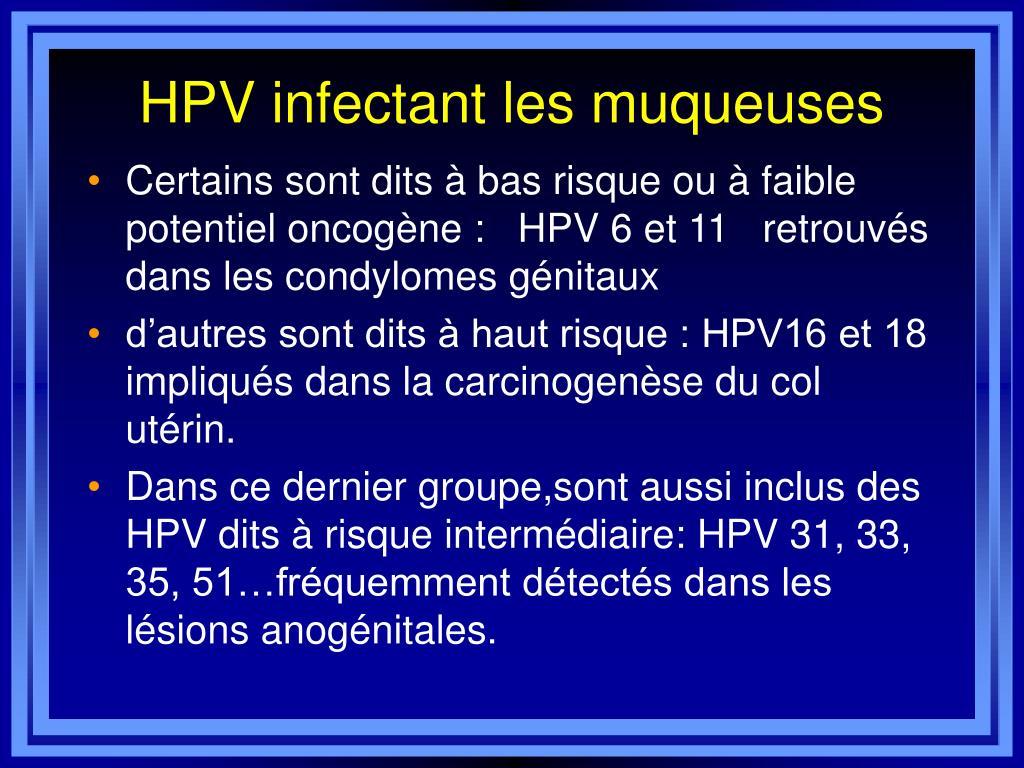papillomavirus humain ppt)