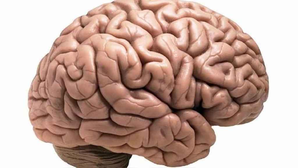 cancer de cerebral