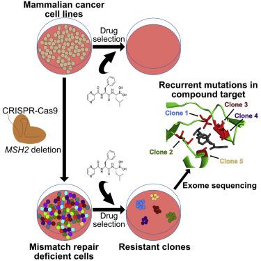genetic cancer cells traitement papillomavirus ovule