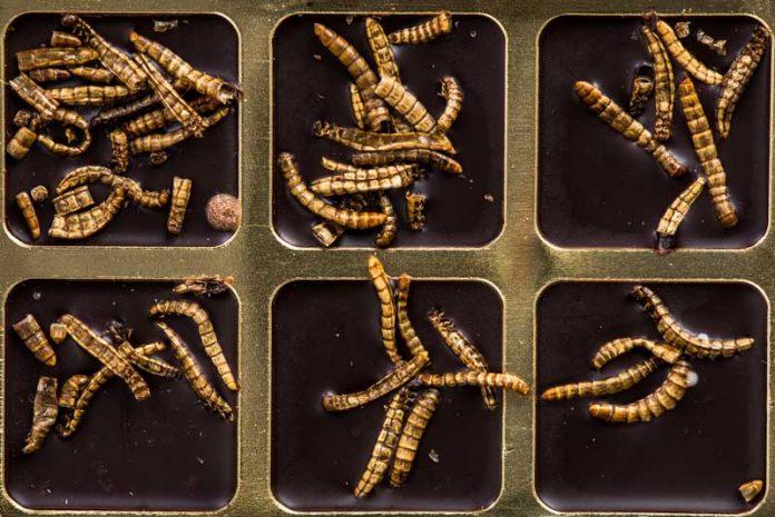 paraziti intestinali copii simptome