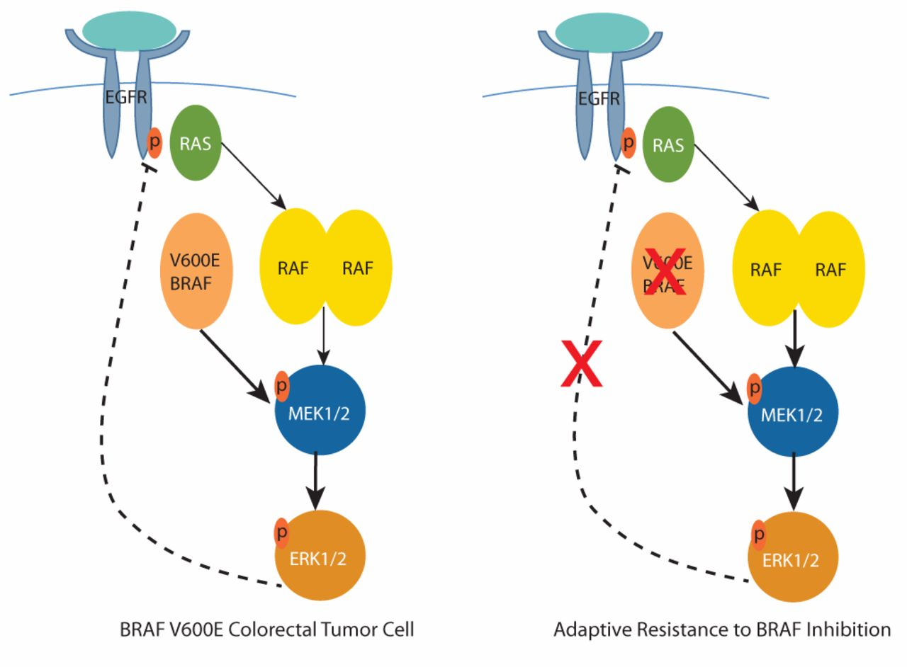 colorectal cancer braf mutation)