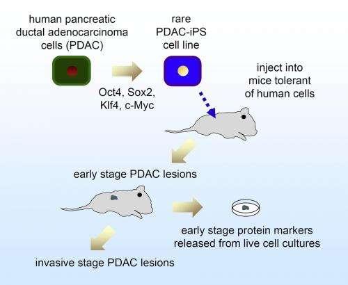 cancer pancreas marker)