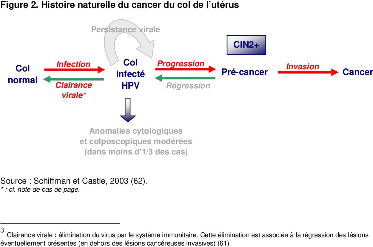 hpv et cancer du col de luterus