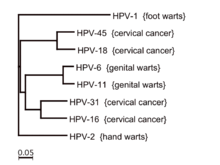 hpv type with warts)