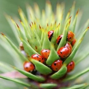 paraziti flori apartament)