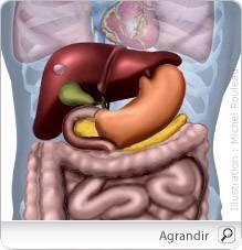 cancer hormonal du foie