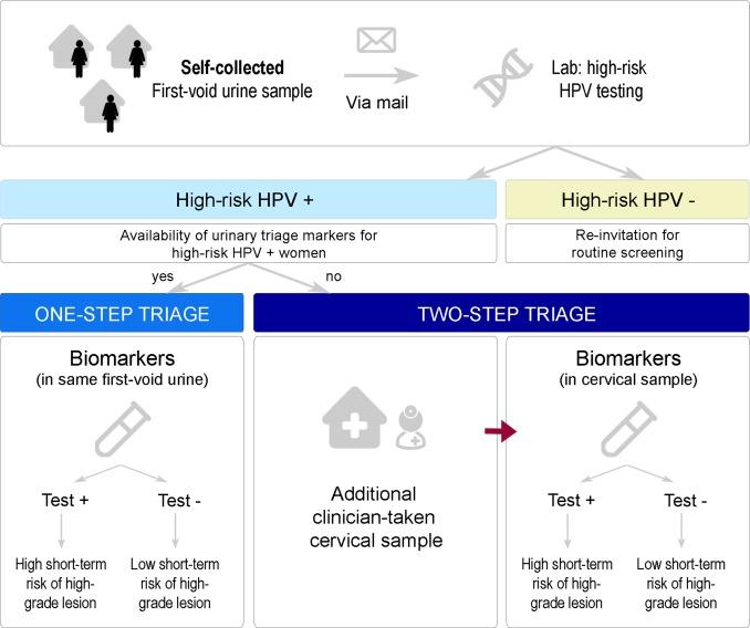hpv triage definition