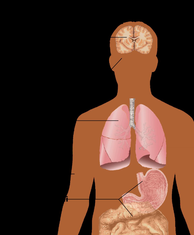 papilloma virus segni e sintomi)
