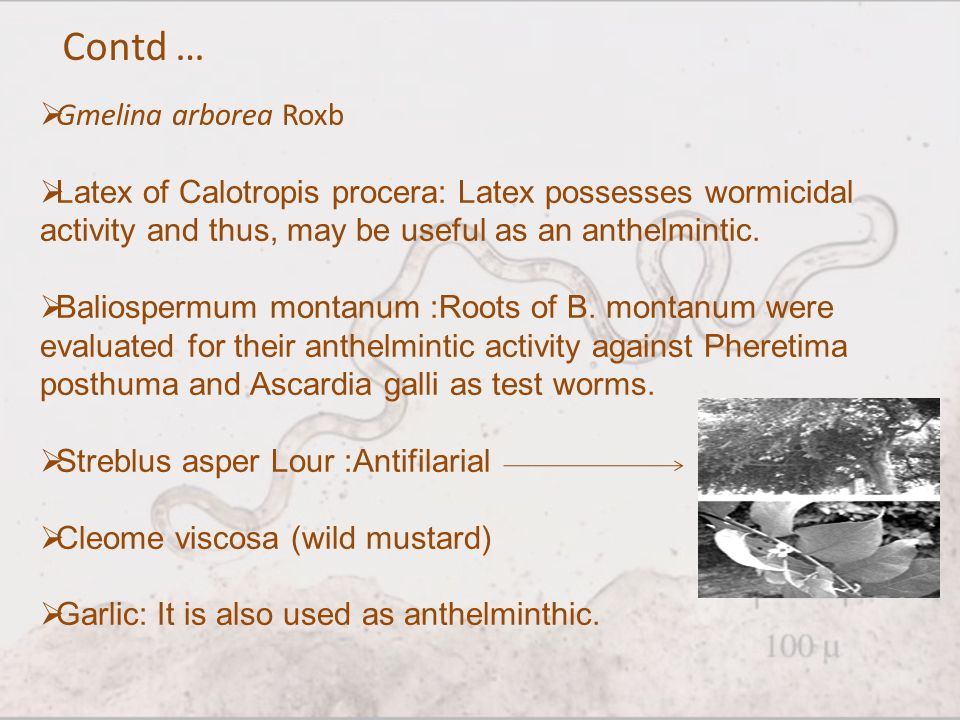 anthelmintic root meaning