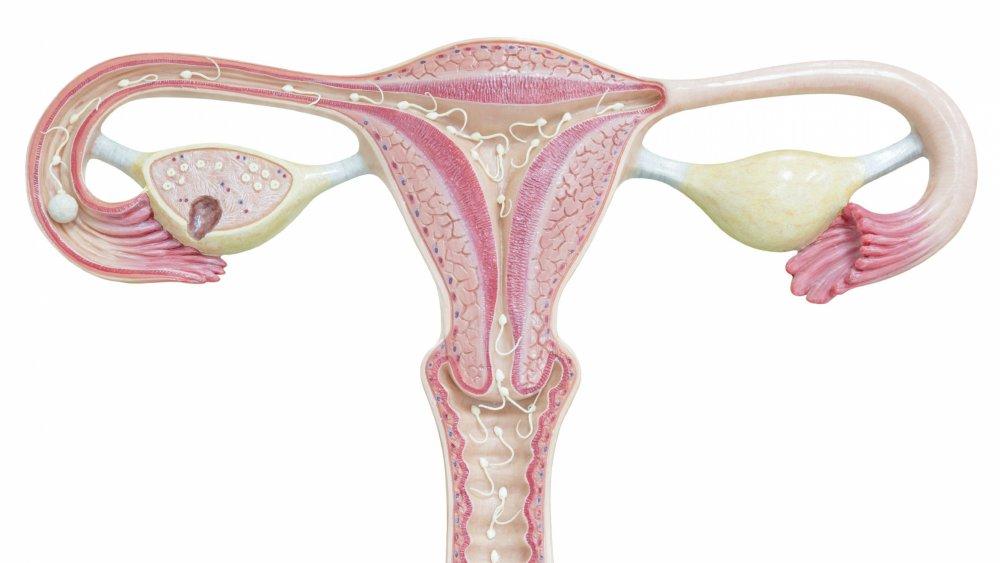 papillomavirus stade 3 et grossesse