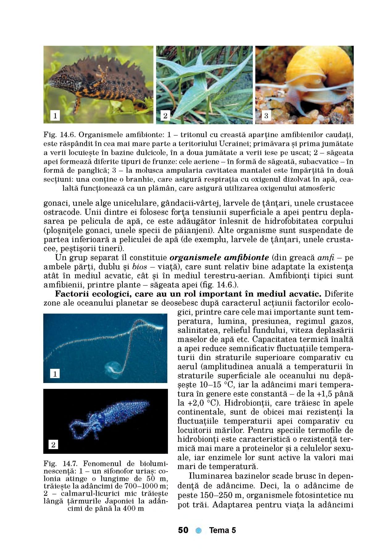 activitatea fiziologica a viermelui marului hpv na lingua como curar