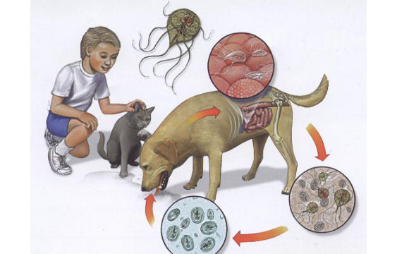 giardia tratament medicamentos)