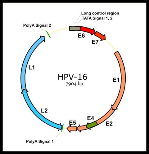 papiloma humano tipo 3