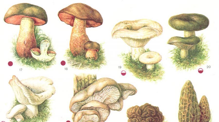 ciuperci hpv)