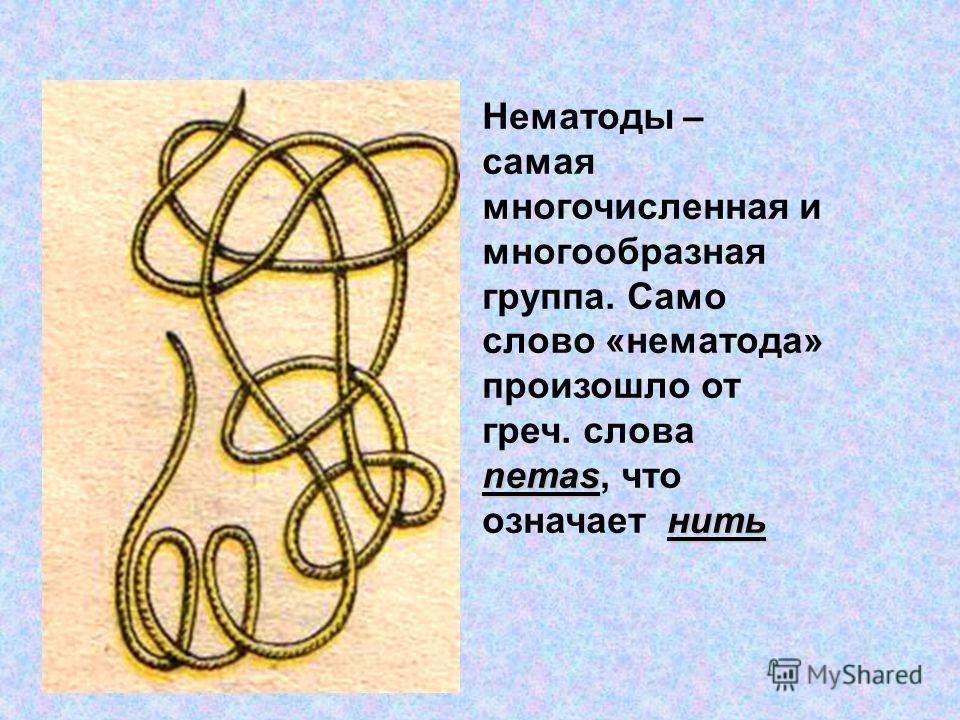 Paraziti intestinali transmisi omului de catre animale