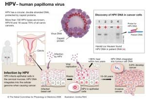 Vaccinurile HPV bivalente și quadrantvalente, Care este diferența?