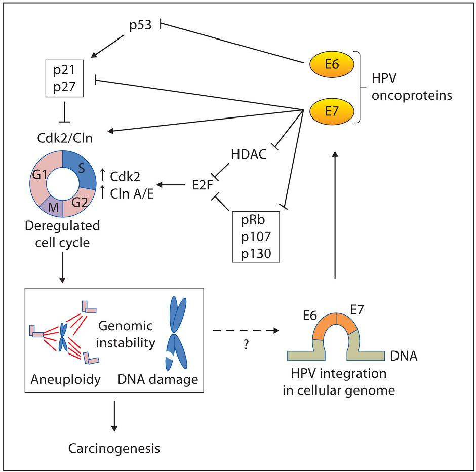 negi imunomodulatoare genitale hpv virus prostata