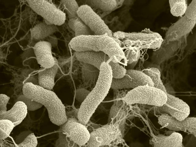 Importanța bacteriilor by Zelenszky Bianca on Prezi