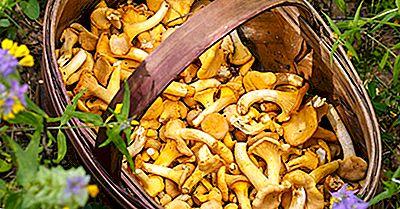 5 tipuri de ciuperci comestibile)