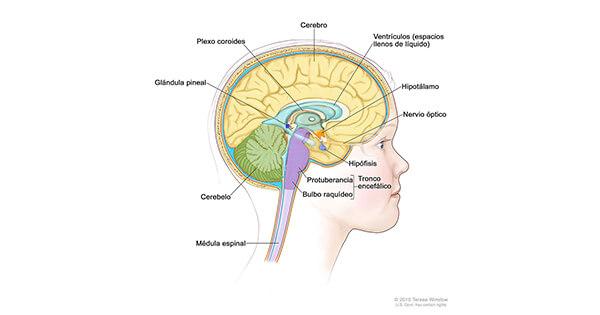 Boala Alzheimer, Referat