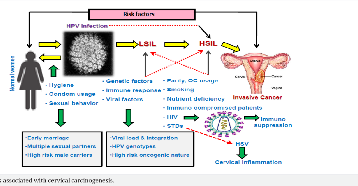 hpv cervical cancer risk factor human papillomavirus (hpv) vaccine (3 doses) 2