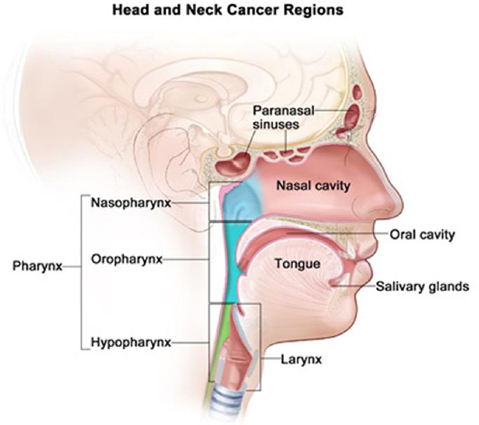 hpv nasal cavity)