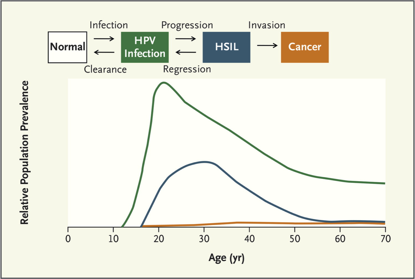 human papillomavirus prevalence)