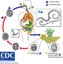 helminths definition microbiology)