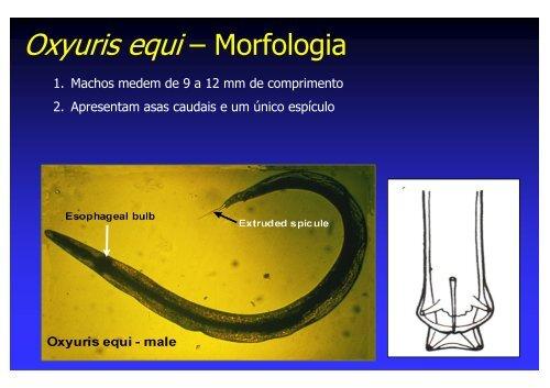 oxyuris equis animale parazite exemple