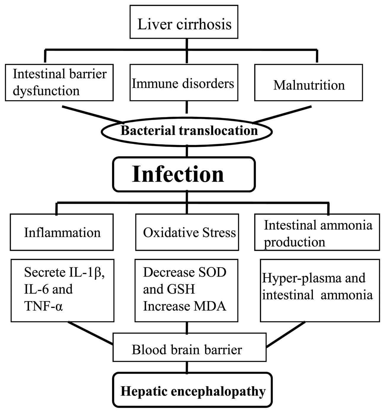 liver cancer hepatic encephalopathy enterobius vermicularis biologia