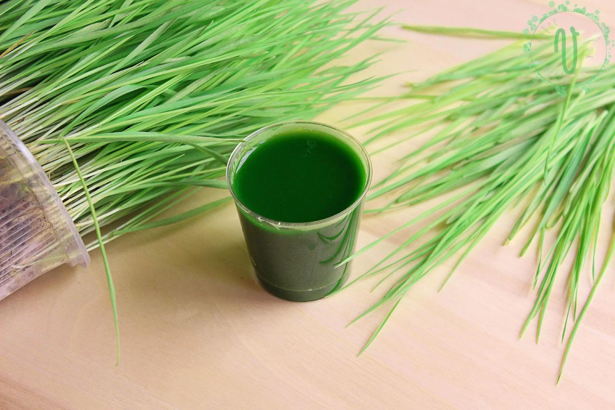 50 de motive pentru a bea in fiecare zi suc din iarba de grau | kd-group.ro