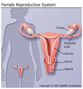 cervical cancer effects on the body