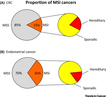 endometrial cancer msi-h)