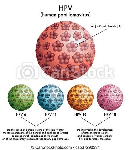 human papillomavirus diagram)