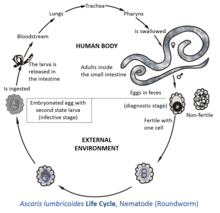 virus del papiloma humano informacion