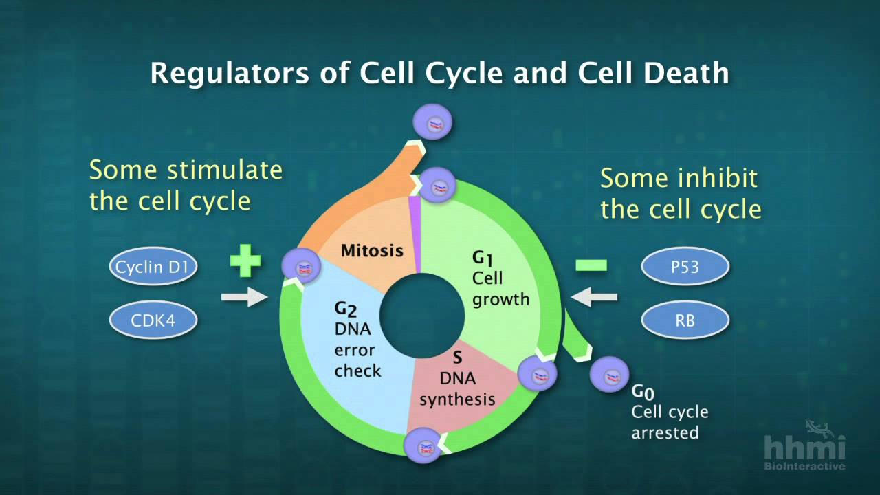 cancer genetic causes