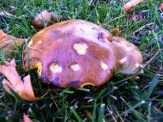 Microdozajul cu ciuperci te-ar putea face să tragi ca locomotiva când ai de muncă