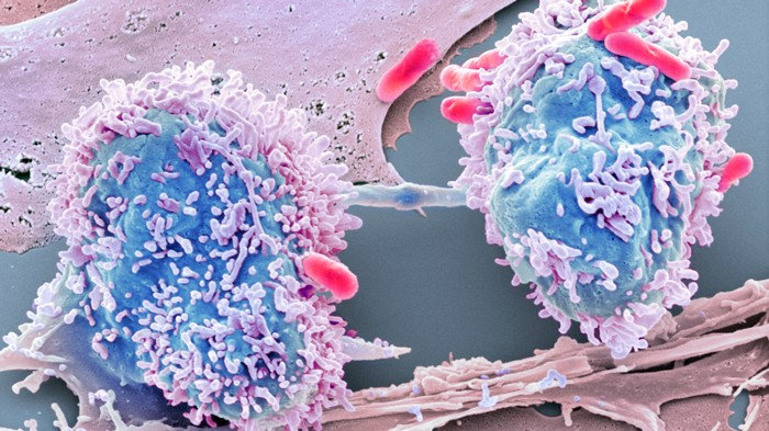 cancer intestinal bacteria)