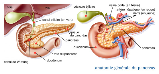 cancer du pancreas la queue)